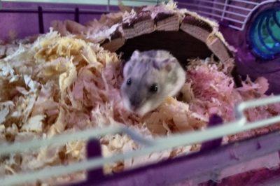 Hamstery, Lafayette