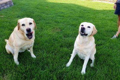 Mylie & Tilly, Niwot