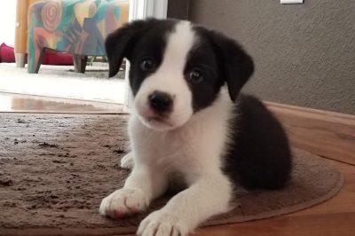 Rocco, Denver
