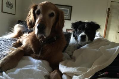 Spencer & Buddy, Niwot